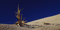 Bare tree on a landscape, USA von Panoramic Images
