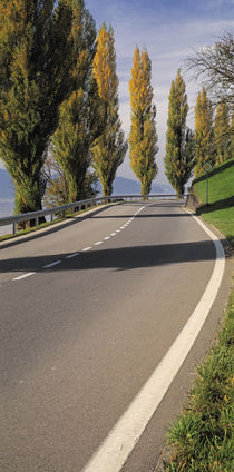 Switzerland, Lake Zug, View of Populus Trees lining a road by Panoramic Images
