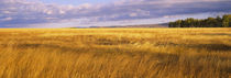 Crop in a field, Last Dollar Road, Dallas Divide, Colorado, USA von Panoramic Images