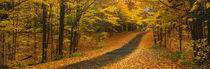 Autumn Road, Emery Park, New York State, USA by Panoramic Images
