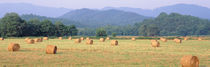 Hay bales in a field, Murphy, North Carolina, USA von Panoramic Images