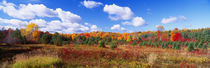 Panorama Print - Herbstlaub, New York State, USA von Panoramic Images