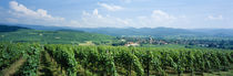 Panoramic view of vineyards, Kirchhofen, Markgraflerland, Baden, Germany von Panoramic Images