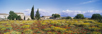 Buildings in a field, Majorca, Spain von Panoramic Images