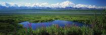 Panorama Print - Denali Nationalpark, Alaska, USA von Panoramic Images