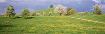 Switzerland, Zug, fields in bloom by Panoramic Images