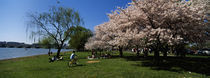 Group of people in a garden, Cherry Blossom, Washington DC, USA von Panoramic Images