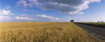 Wheat crop in a field, North Dakota, USA von Panoramic Images