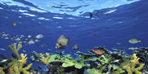 School of fish swimming in the sea, Digital Composite von Panoramic Images