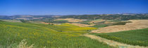 Agricultural fields, Ronda, Malaga, Andalusia, Spain von Panoramic Images
