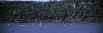 wind surfing in a river, Hood River, Oregon, USA von Panoramic Images