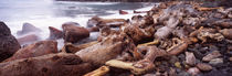 Driftwood on the beach, Oregon Coast, Oregon, USA by Panoramic Images