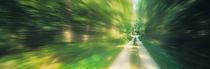 Road, Greenery, Trees, Germany von Panoramic Images