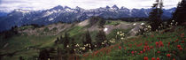 Wildflowers on mountains, Mt Rainier, Pierce County, Washington State, USA von Panoramic Images