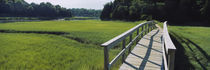 Boardwalk in a field, Nauset Marsh, Cape Cod, Massachusetts, USA by Panoramic Images