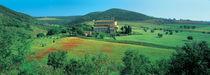 Montalcino, Tuscany, Italy von Panoramic Images