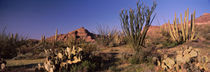 Panorama Print - Organ Pipe Cactus National Monument, Arizona, USA von Panoramic Images