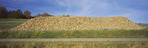 Heap Of Sugar Beets In A Field, Stuttgart, Baden-Wurttemberg, Germany by Panoramic Images