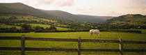 Horse in a field, Enniskerry, County Wicklow, Republic Of Ireland von Panoramic Images