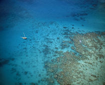 coral reefs, near Isla Palominitos, Puerto Rico by Panoramic Images