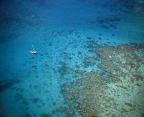 coral reefs, near Isla Palominitos, Puerto Rico von Panoramic Images
