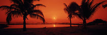 Silhouette of palm trees on the beach at dusk, Lydgate Park, Kauai, Hawaii, USA by Panoramic Images