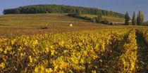 Vineyard on a landscape, Bourgogne, France von Panoramic Images