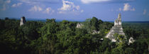 High Angle View Of An Old Temple, Tikal, Guatemala by Panoramic Images