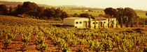 Farmhouses in a vineyard, Penedes, Catalonia, Spain von Panoramic Images