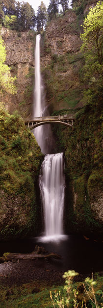 Waterfall in a forest, Multnomah Falls, Columbia River Gorge, Oregon, USA by Panoramic Images