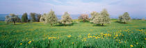 Peartrees Fields Aargau Switzerland by Panoramic Images