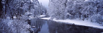 Snow covered trees along a river, Yosemite National Park, California, USA von Panoramic Images