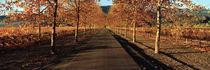 Vineyards along a road, Beaulieu Vineyard, Napa Valley, California, USA von Panoramic Images