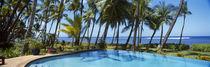 Palm trees near a swimming pool, Maui, Hawaii, USA by Panoramic Images