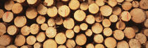 Marked Wood In A Timber Industry, Schwarzwald, Germany von Panoramic Images