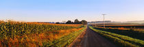 Road Along Rural Cornfield, Illinois, USA by Panoramic Images