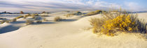 Desert plants in a desert, White Sands National Monument, New Mexico, USA von Panoramic Images