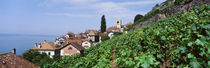 Vineyards, St. Saphorin, Switzerland by Panoramic Images
