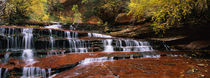 Waterfall in a forest, North Creek, Zion National Park, Utah, USA by Panoramic Images