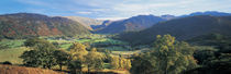 High angle view of trees on the mountainside, Borrowdale, Lake District, England by Panoramic Images