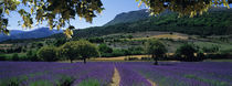 Mountain behind a lavender field, Provence, France by Panoramic Images