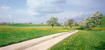 Dirt Road Canton Zug Switzerland von Panoramic Images