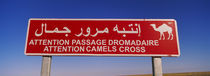 Low angle view of a camel crossing signboard, Douz, Tunisia by Panoramic Images