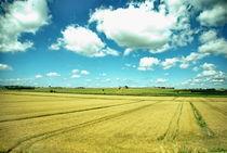 Fields of Amber von Julie Hewitt