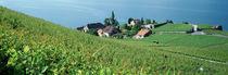 Canton Vaud, Switzerland von Panoramic Images