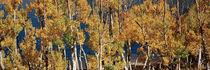 June Lake Loop, Eastern Sierra, California, USA von Panoramic Images