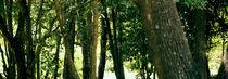 Trees von Marlon Ayres