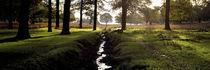 Stream passing through a park, Richmond Park, London, England von Panoramic Images