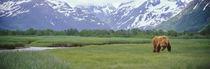 Katmai National Park, Alaska, USA by Panoramic Images