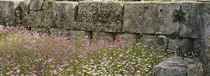 Flowers near a stone wall, Ancient Olympia, Peloponnese, Greece von Panoramic Images